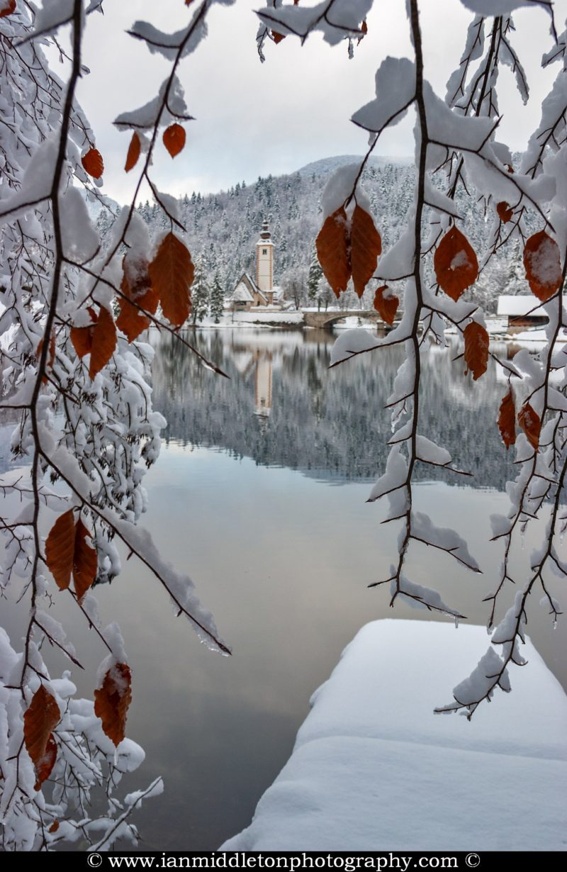 View of the Church of Saint John (Sveti Janez) through brown leaves on Lake Bohinj in winter, Slovenia
