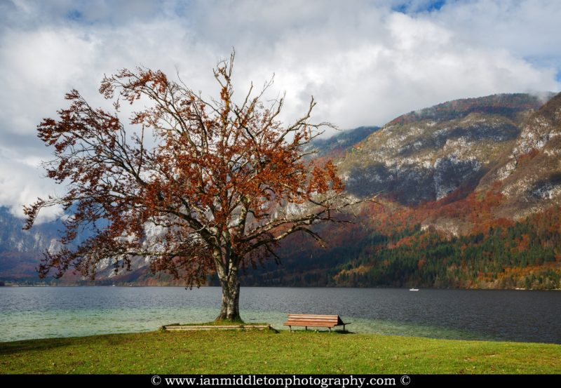 The most photographed tree at Bohinj Lake on an autumn tree, Triglav National Park, Slovenia.
