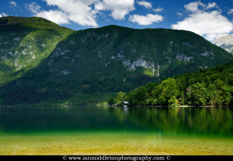 Late Spring greens at Lake Bohinj, Triglav National Park, Slovenia