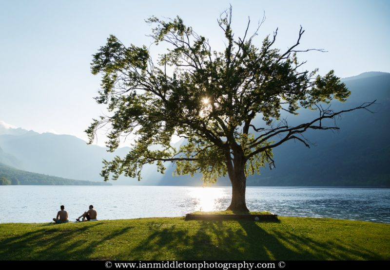 The most photographed tree at Bohinj Lake on an Summer afternoon, Triglav National Park, Slovenia.