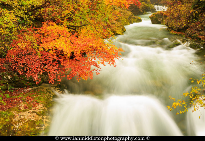 Autumn colours in the Soteska Vintgar gorge, Gorje, near Bled, Slovenia. The 1.6 km long Vintgar gorge has been carved through the vertical rocks of the Hom and Bort hills by the Radovna River.