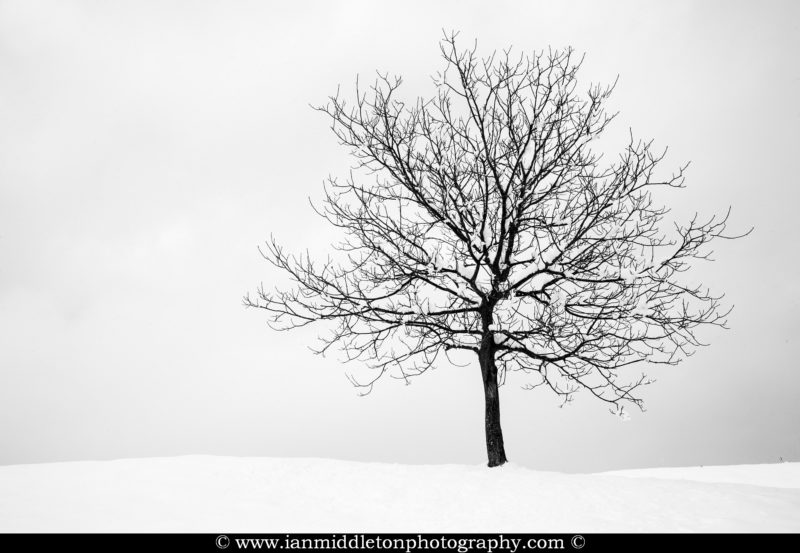 Lone tree on a snow covered hill in prezganje in the Jance hills to the east of Ljubljana, Slovenia.