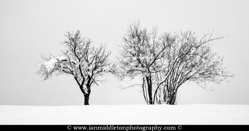 Trees on a snow covered hill in prezganje in the Jance hills to the east of Ljubljana, Slovenia.