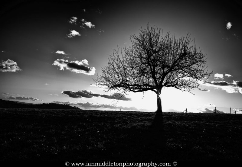 Sun appearing behind a tree on a hill in prezganje in the Jance hills to the east of Ljubljana, Slovenia. Converted to Black and White