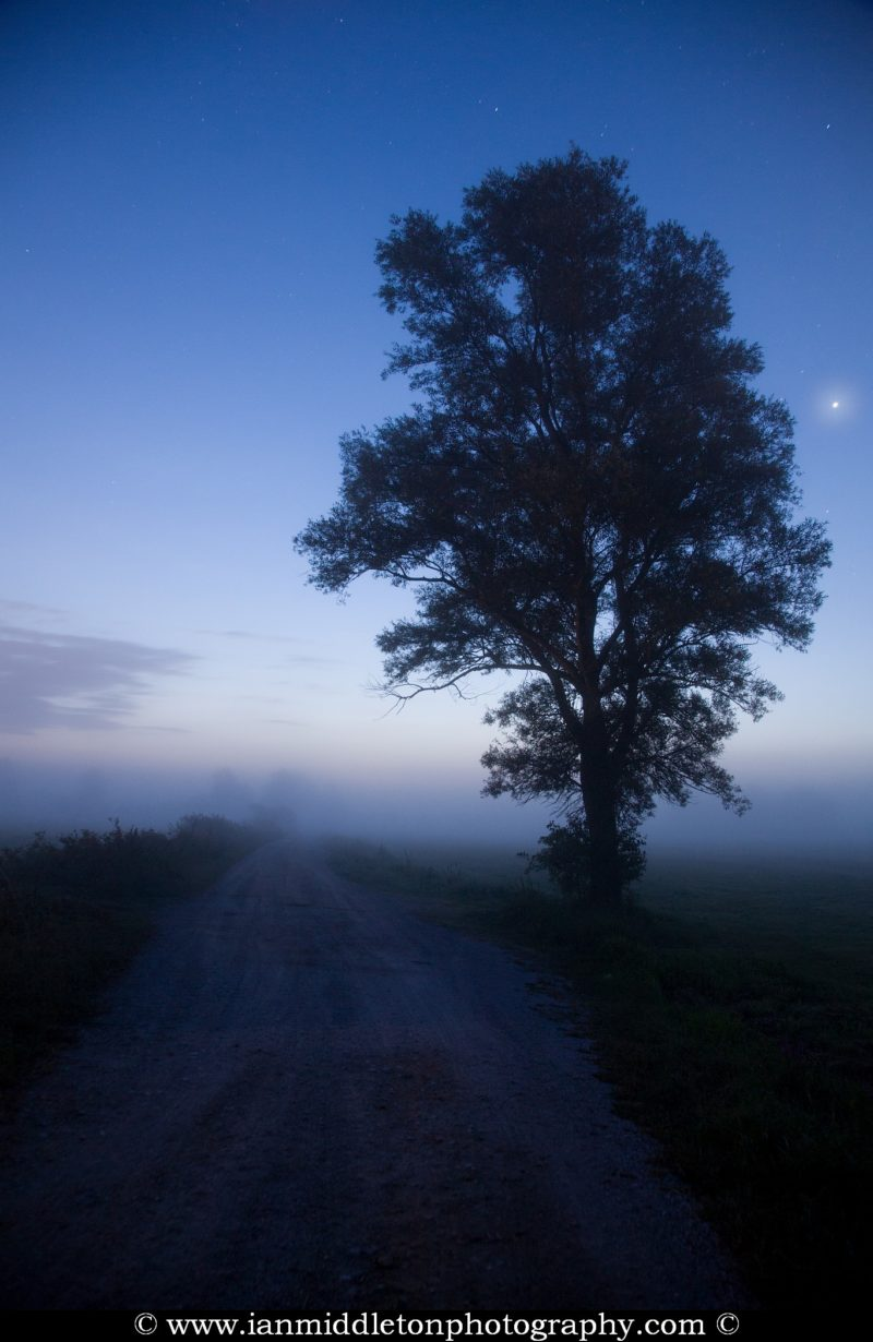 Gravel road leading into the misty dawn with the planet Venus shining bright to the right of the tree, seen on the Ljubljana Marshland (Ljubljansko Barje), a large area of wetland 160 square kilometres in size.
