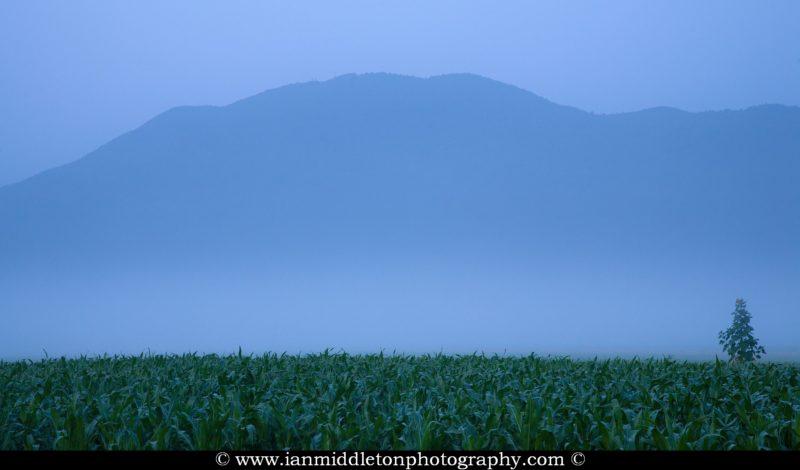 Summer morning mist clearing over a cornfield and slowly revealing Krim mountain on the Ljubljana Marshland (Ljubljansko Barje), a large area of wetland 160 square kilometres in size.