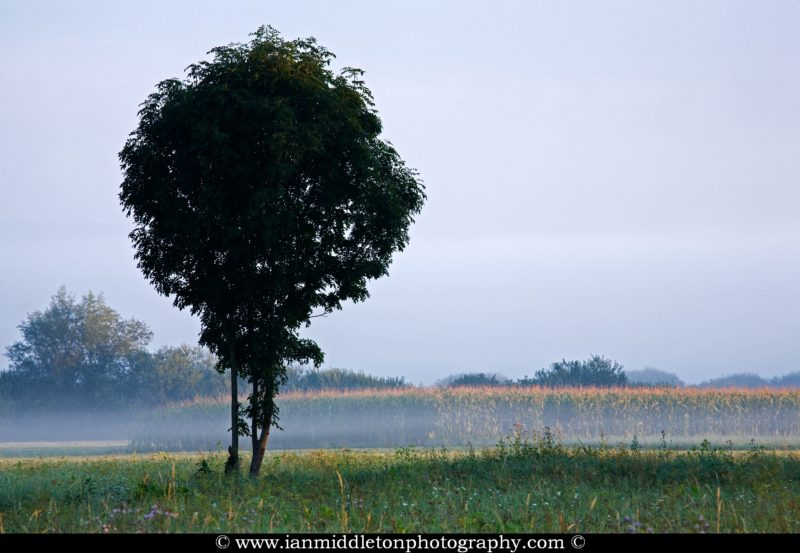 A lonely dark tree on the Ljubljana Marshland (Ljubljansko Barje), a large area of wetland 160 square kilometres in size.