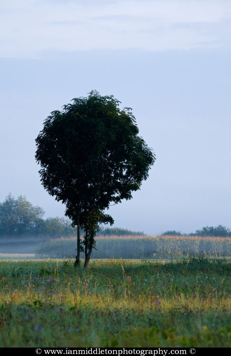 A lonely dark tree waits for the sun as it rises behind some trees and begins to illuminate the rest of the landscape on the Ljubljana Marshland (Ljubljansko Barje), a large area of wetland 160 square kilometres in size.