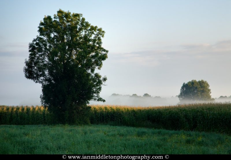 Morning sun rising, burning off the mist and beginning to illuminate the trees and cornfield on the Ljubljana Marshland (Ljubljansko Barje), a large area of wetland 160 square kilometres in size.