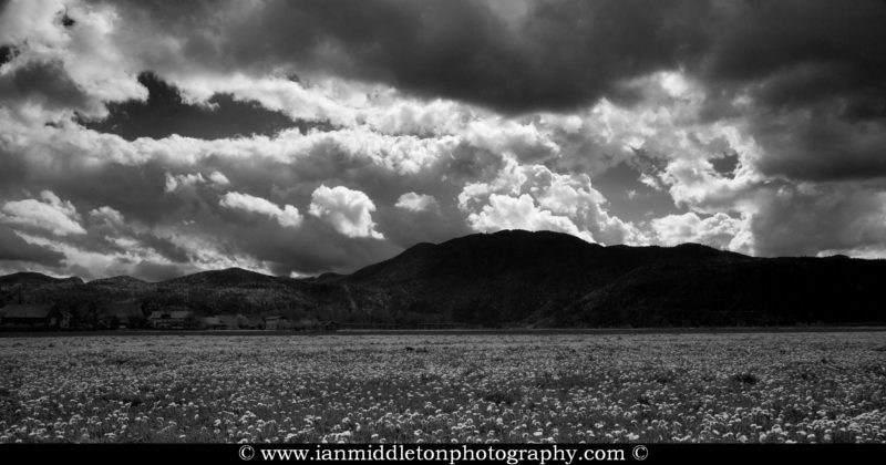 Storm clouds clearing across a field of dandelions to Krim mountain, the highest point on the Ljubljana Marshland (Ljubljansko Barje), a large area of wetland 160 square kilometres in size.