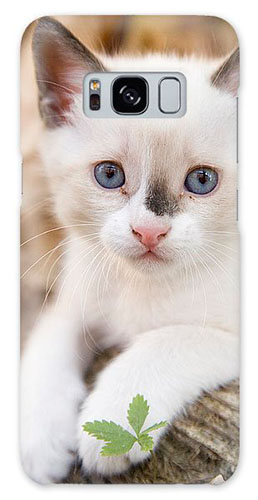 Cute white kitten on galaxy phone cases