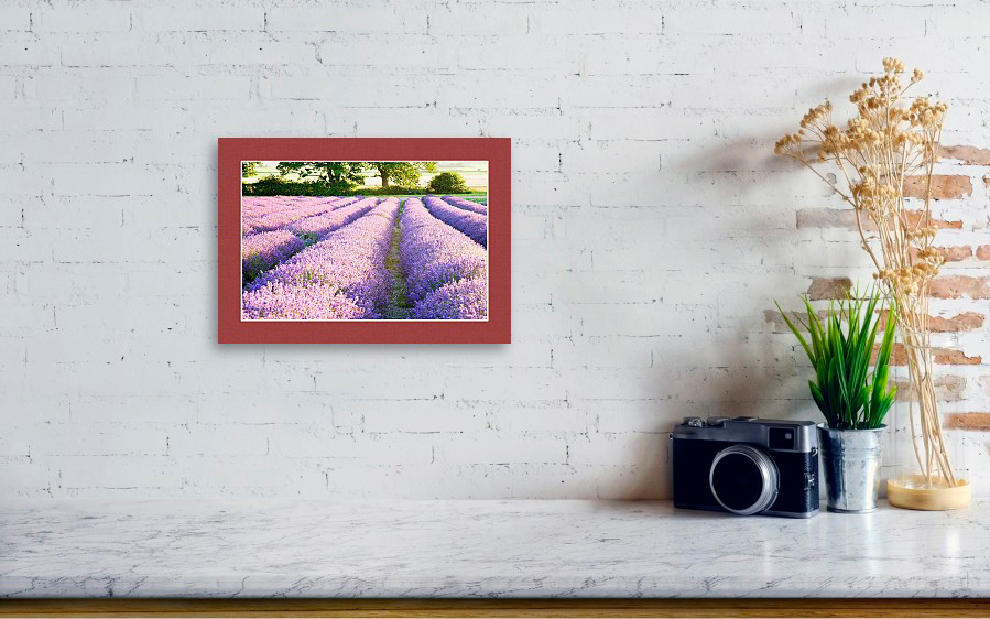 Lavender fields, fine art photography example hanging on wall