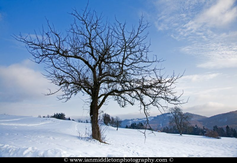 Trees on a snow covered hill near Volavlje in the Jance hills to the east of Ljubljana, Slovenia.