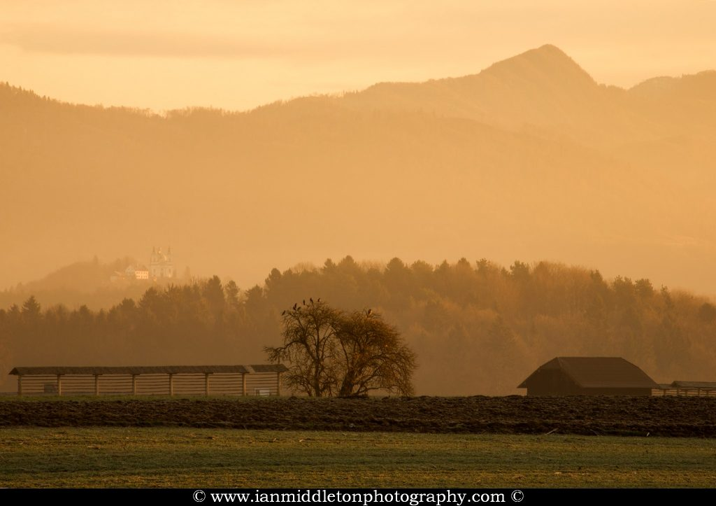 Sunrise over field in Brnik with Tunjice church appearing through the mist in the background, Gorenjska, Slovenia. Next to the birds in the tree is a hayrack, used by farmers to hang and dry hay. These are a common sight across the Slovenian landscape.