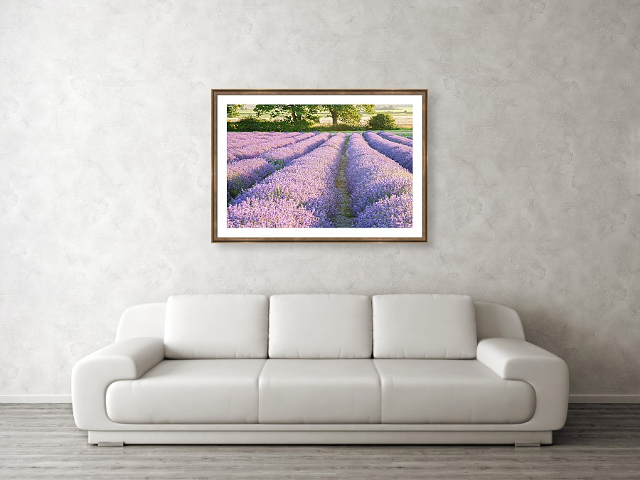 Framed print example of lavender photo